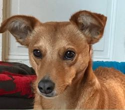 Malay, Chien à adopter