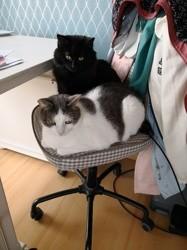 Mango et prunelle, Chat à adopter