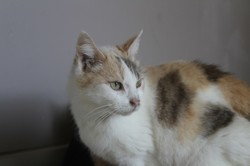 Anya, Chat à adopter
