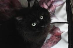 Salem, Chat à adopter