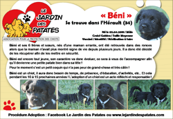 Béni, Chiot border collie, golden retriever à adopter