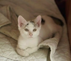 Polo, Chaton à adopter