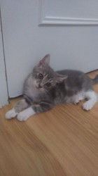 Cookie, Chaton à adopter