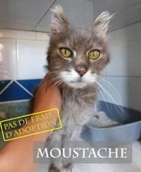 Sos moustache 17 ans très calin, Chien à adopter