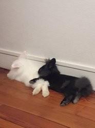 Titus & barnabe, à adopter ensemble, Animal à adopter