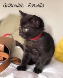 Gribouille, Chaton à adopter