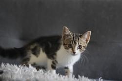 Ness, Chaton à adopter
