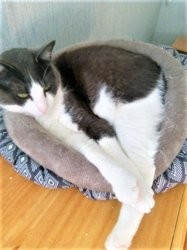 Gwennadu, Chat à adopter