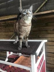 Eclipse, Chat à adopter