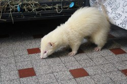 Nappa, Animal à adopter