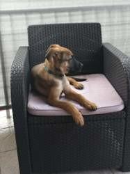 Maïdo, Chiot à adopter