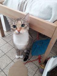Nagini, Chat européen à adopter