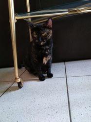 Niama, Chat à adopter