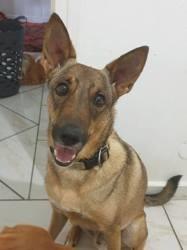 Marvel, magnifique chien non lof, Chien à adopter
