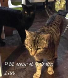 Petit coeur et noisette, Chat à adopter