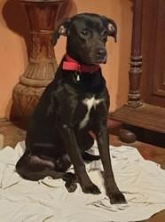 Pupi, Chien à adopter