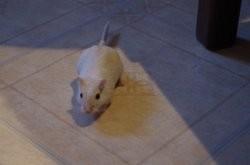 Pippo et zefiro, Animal à adopter