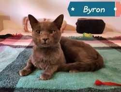 Byron - fiv+, Chaton à adopter