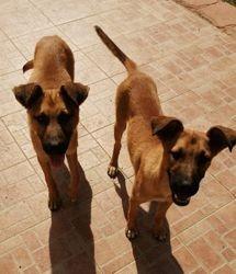 Benji et holly, Chiot à adopter
