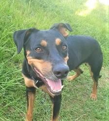 Foster, jeune chien croisé non lof, Chien à adopter