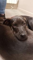 Zumba, Chiot à adopter