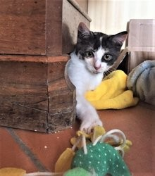 Chanel, Chaton à adopter