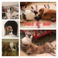 Pims et bun, Animal à adopter