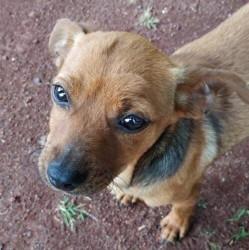 Devyn (réservé), Chiot à adopter