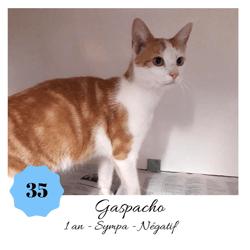 Gazpacho, Chat européen à adopter