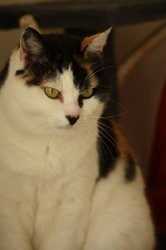 Cannelle, Chat à adopter
