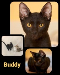 Buddy & yasmina, Chaton gouttière à adopter