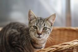 Miko, Chaton à adopter