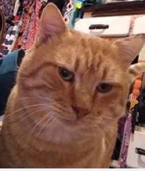 Hugo, Chat à adopter