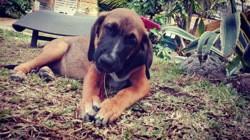 Thommy (réservé), Chiot à adopter
