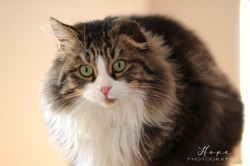 Captain hook, Chat à adopter