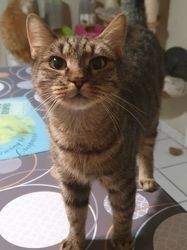 Felicie, Chat à adopter