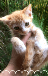 Pikatcha, Chaton à adopter