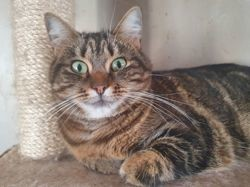 Crispies, Chat à adopter