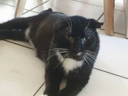 Rocco, Chat à adopter
