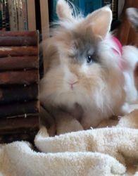 Lili, Animal à adopter