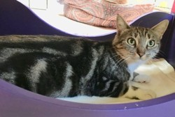 Rosalie, Chat à adopter