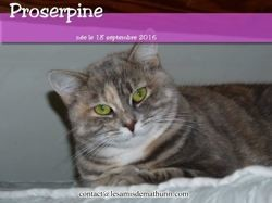 Proserpine, Chat à adopter
