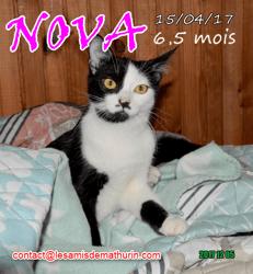 Nova, Chat à adopter