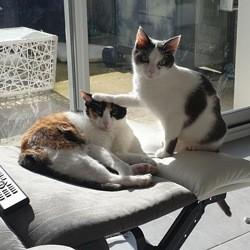 Pistache, Chat à adopter