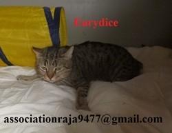 Eurydice, Chat européen à adopter