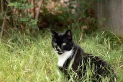 Moretti, Chat européen à adopter