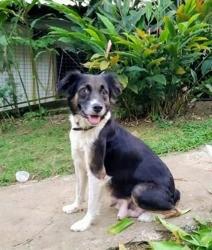 Mabel, jeune chienne croisée créole, Chien à adopter