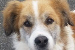Kody, Chien à adopter