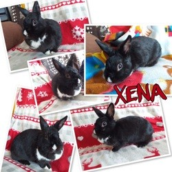 Xena, Animal à adopter