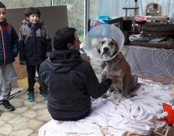 Kaîto, Chiot à adopter